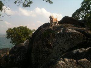 Reisen mit Hund in Malawi