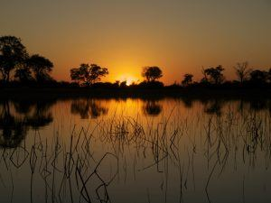 Best Lodges Okavango Delta, Camping and Activities.