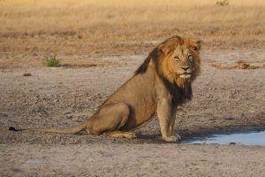 Tiere im Chobe National Park