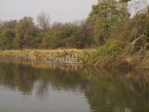 Swimming in Chobe River. selbstfahrer safari namibia.