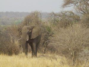 Elephant in Bwabwata National Park. safari namibia selbstfahrer.
