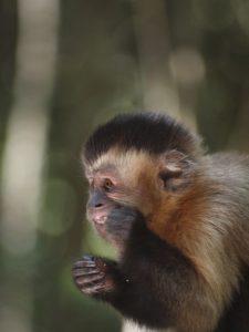 Monkey Land Plettenberg Bay