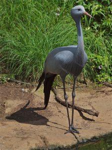 Birds of Eden in Plettenberg Bay