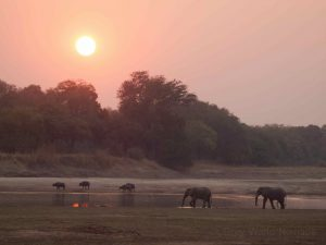 Herd of elephants in South Luangwa National Park
