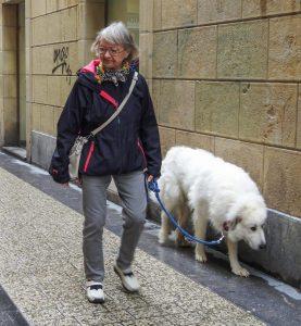Dog-friendly San Sebastian Spain