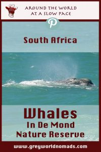 Whales like the Southern Right Whale migrate from the cold Antarctic to the warmer waters of the South African coast to breed before returning to the Antarctic summer.