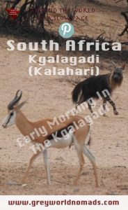 The Kgalagadi Transfrontier Park boasts of wildlife. Herds of antelopes provide food for predators, both to be watched frequently at the waterholes.