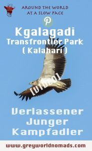 Der Kampfadler ist der grösste Adler in Afrika. Wegen reduziertem Lebensraum, Tötung durch Vergiftung und Erschiessung ist er vom Aussterben bedroht.