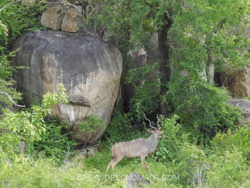 kudu-kruger-southafrica-1.jpg