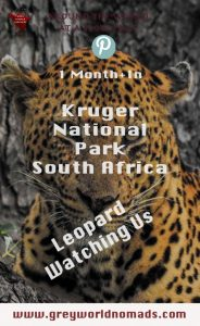Which is the best time to visit Kruger National Park? Is the best place on earth for self drive and guided safaris rightly praised as year around destination?