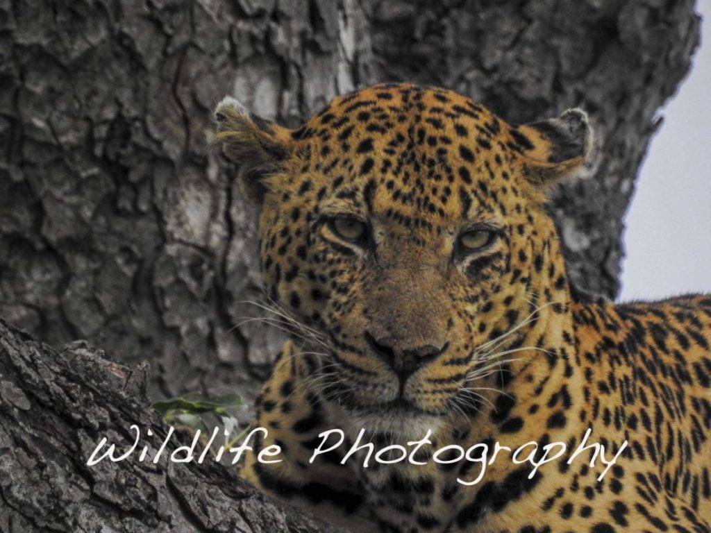 Wildlife Photography - Art Nomad Studuio