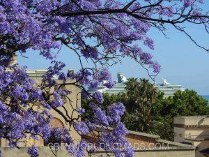 Jacaranda Tree in Malaga Spain - Points of Interest