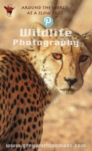 Marcelle's Wildlife Photography: Cheetah in the Kgalagadi Transfrontier Park, South Africa