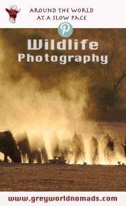 Wildlifephotography: Wildebeest in the Kgalagadi, South Africa. Wildtierfotografie: Gnus in der Kgalagadi, Südafrika