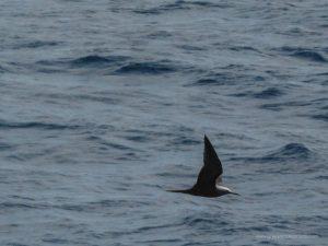 Inselhopping Seychellen, island hopping