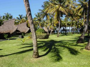 Beautiful beaches, tropical temperatures, hiking in Black River National Park, delicious food and lovely people. That's tropical paradise, isn't it? Mauritius Urlaub.