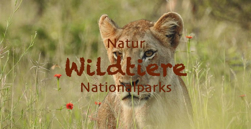 Natur - Wildtiere - Nationalparks