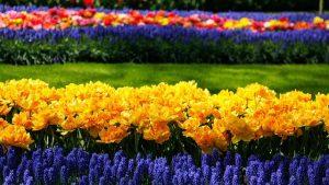 Blumenpark in Holland