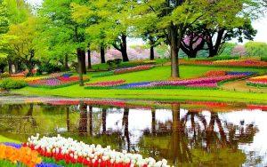 Busreise Keukenhof 2018, amsterdam to keukenhof gardens, amsterdam tulip fields tour