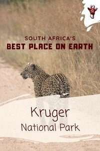 Visiting Kruger National Park, best place on earth? Here you find all you need to know for your Kruger National Park Safari. kruger national park south africa safari - kruger national park south africa camps - kruger national park south africa lodges - kruger national park south africa tips - kruger national park wildlife - kruger national park lodges safari - kruger national park lodges camps - kruger park south africa safari - kruger park south africa lodges - kruger park lodge south africa - kruger park safari - south africa safari kruger - south africa safari lodge travel planner - south africa travel safari trips.